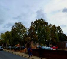 Trees near Jobcentre
