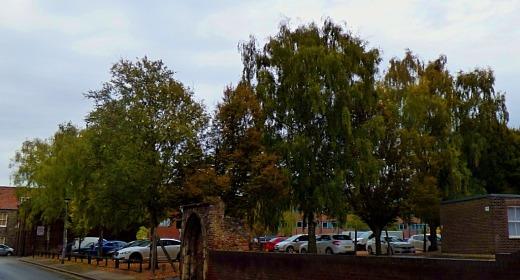 Trees, near jobcentre