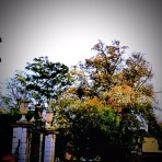 Trees, near Minster