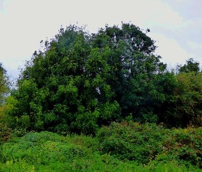 trees near path