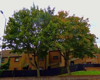 Trees near Trues Yard