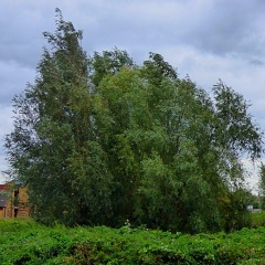 trees, near wasteland
