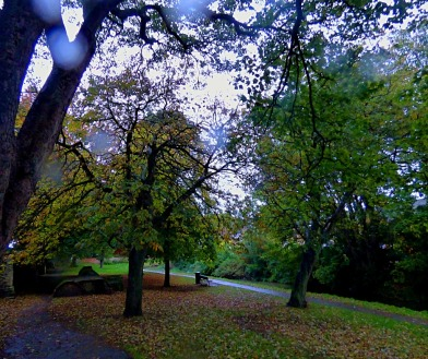 Trees, nr Kettlewell Lane