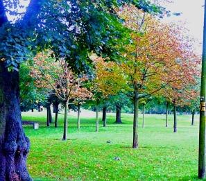 Trees off St John's Walk