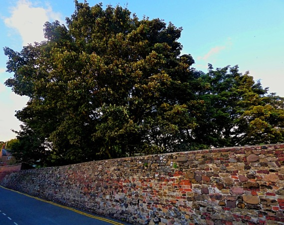 Trees, old town wall II