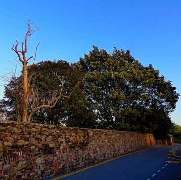 Trees, old town wall