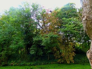 Trees, Recreation Field