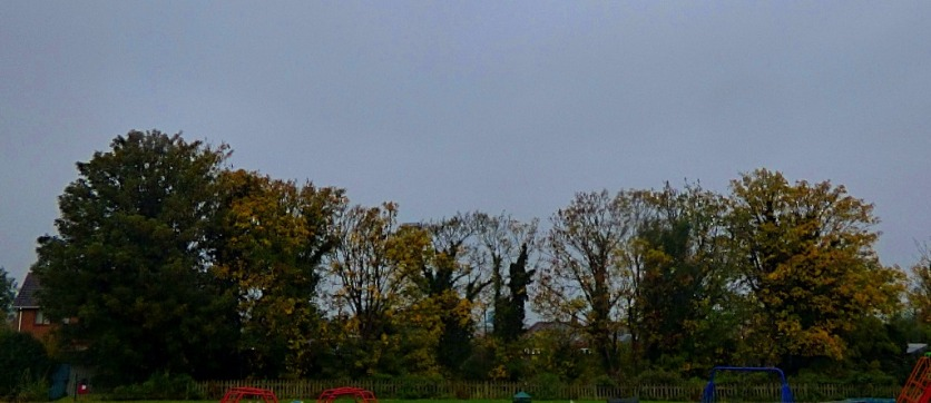 Trees, recreation ground