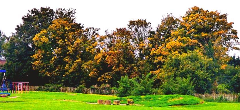 Trees, recreation park