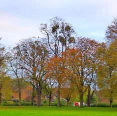 Trees, RF
