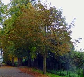 Trees, SJW