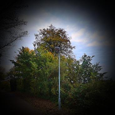Trees, SRP
