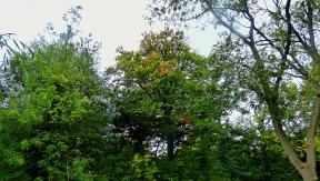 Trees, St John's Walk