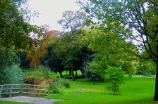 trees, St Johns Walk