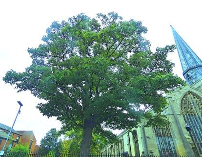 Trees, St Nicks II