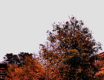 Trees, St Nicks III