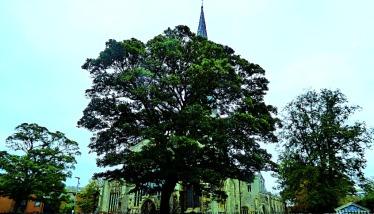 Trees, St Nicks