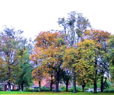 Trees, Tennsyon Avenue II
