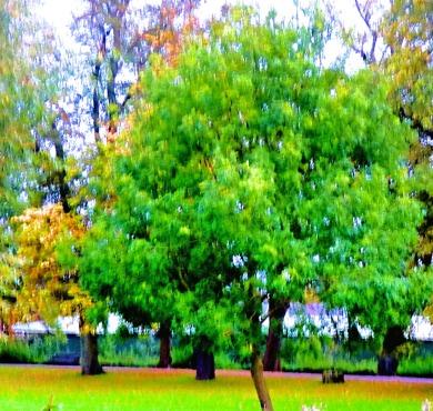 Trees, the boardwalk