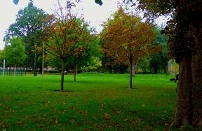 Trees, the walks