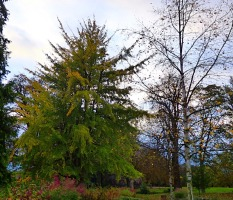 Trees, Vancouver Garden