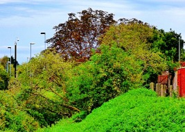 treescape - Bawsey Drain