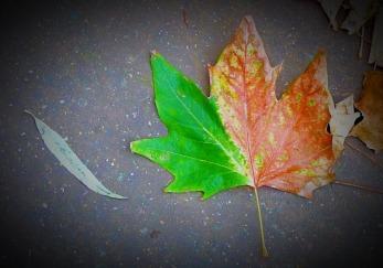 Variegated leaf