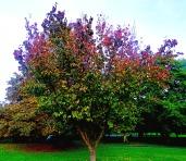variegated tree, the walks