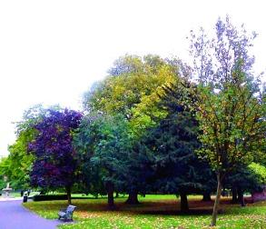 variegated trees, the walks