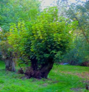 Very small tree