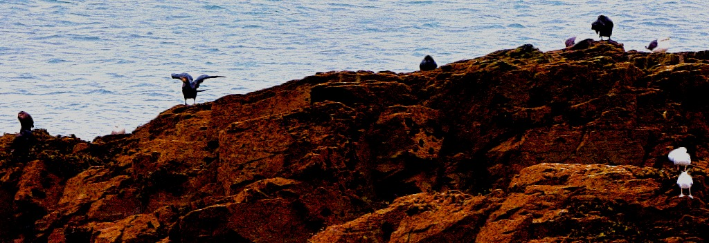 Birds on a rock 2