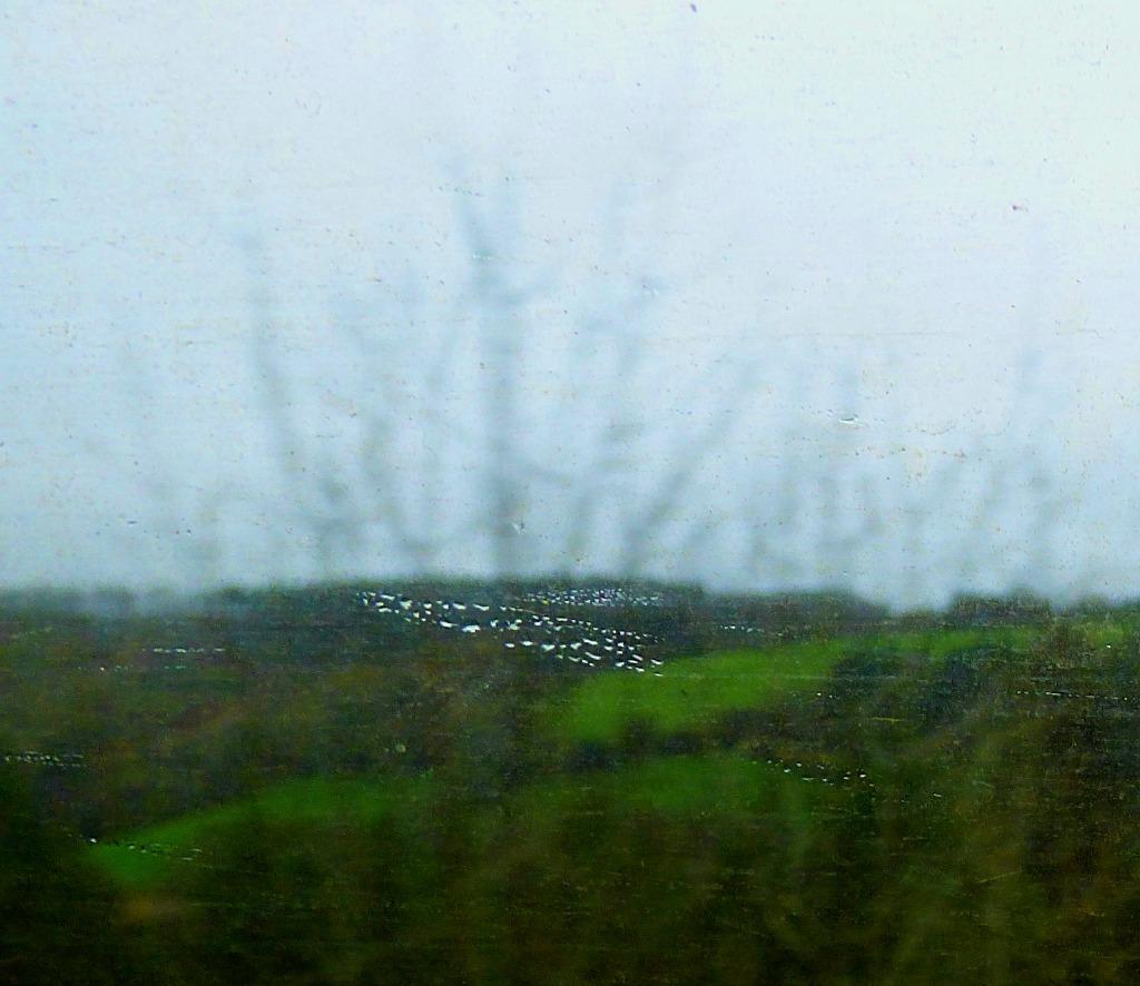 birds through the window