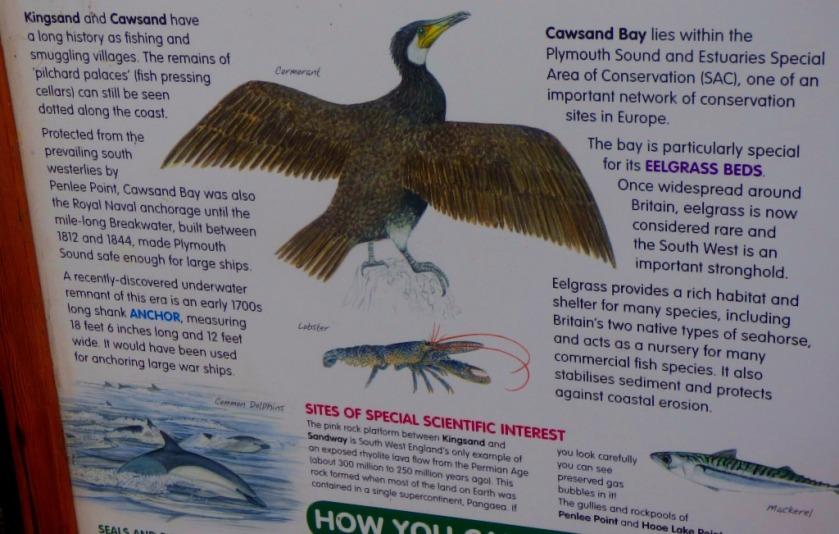 Cormorant Panel