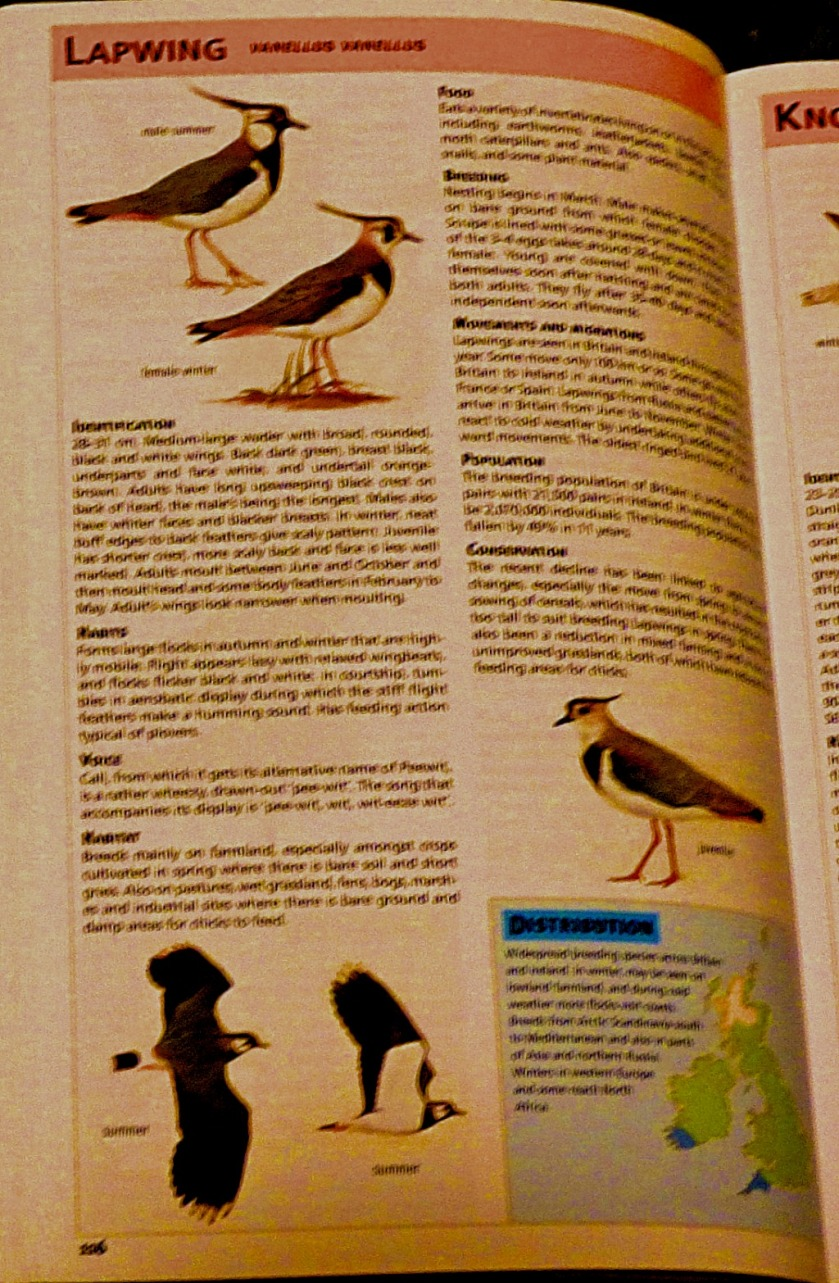 Lapwing - book