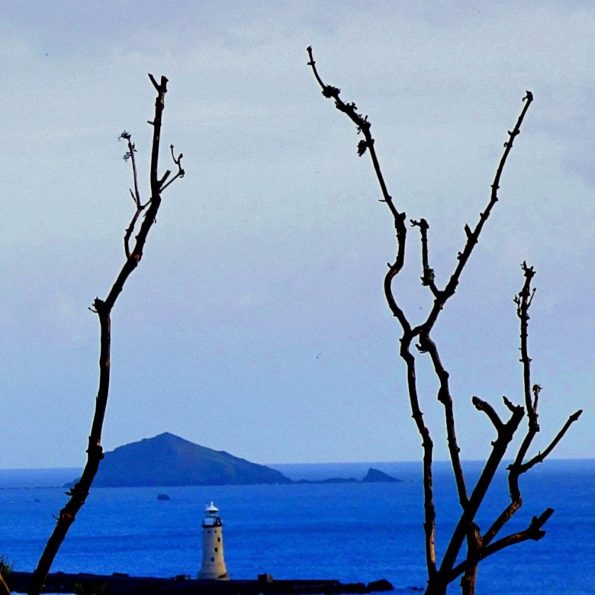 Lighthouse framed by branches