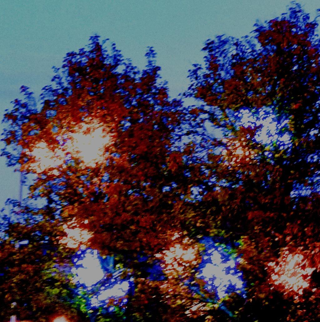 Lights - Norwich tree