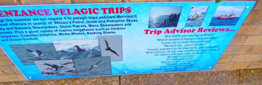Pelagic Trips
