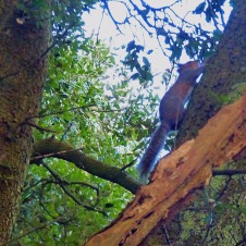 Scampering Squirrel