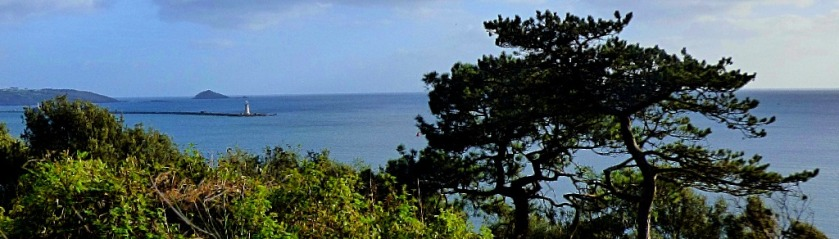 tree framed distant lighthouse