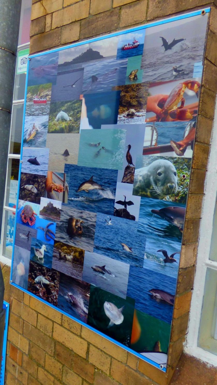 Wildlife Display Board