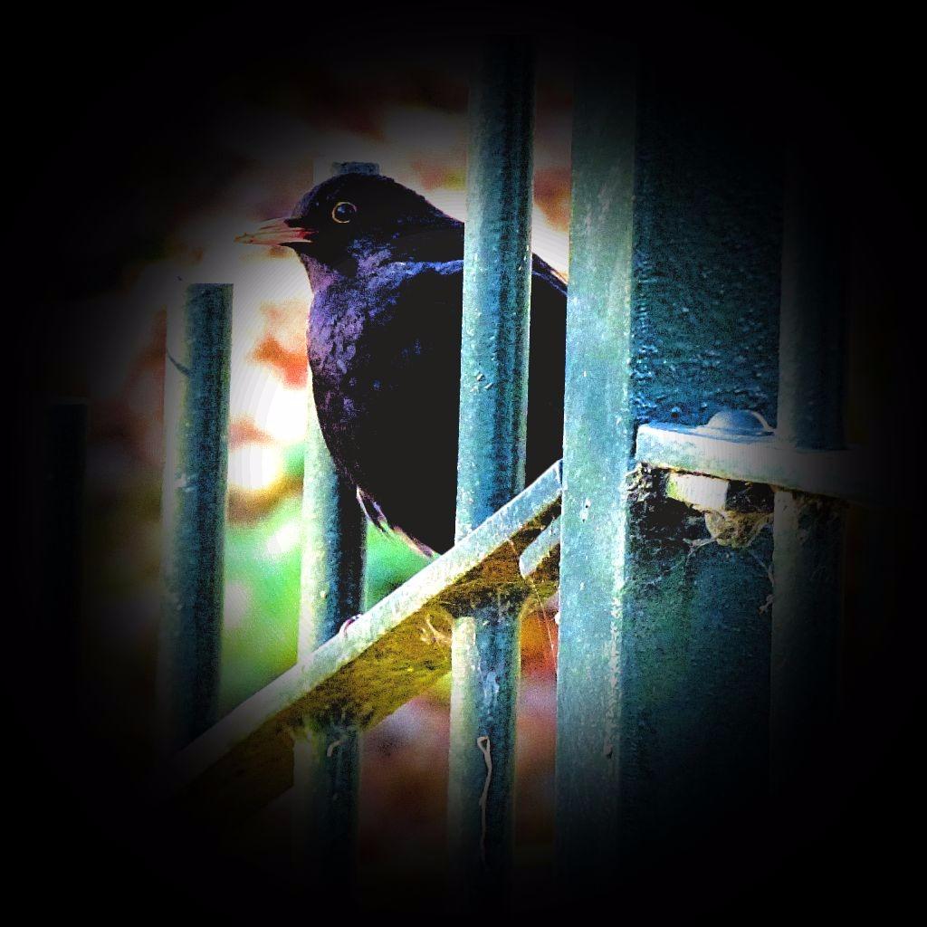 B7ackbird