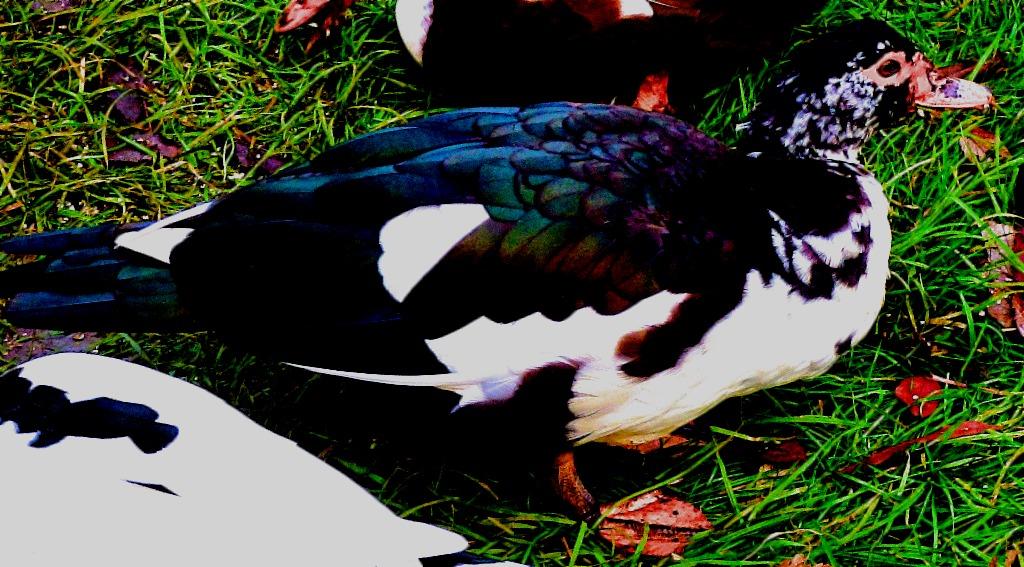 Black bodied bird