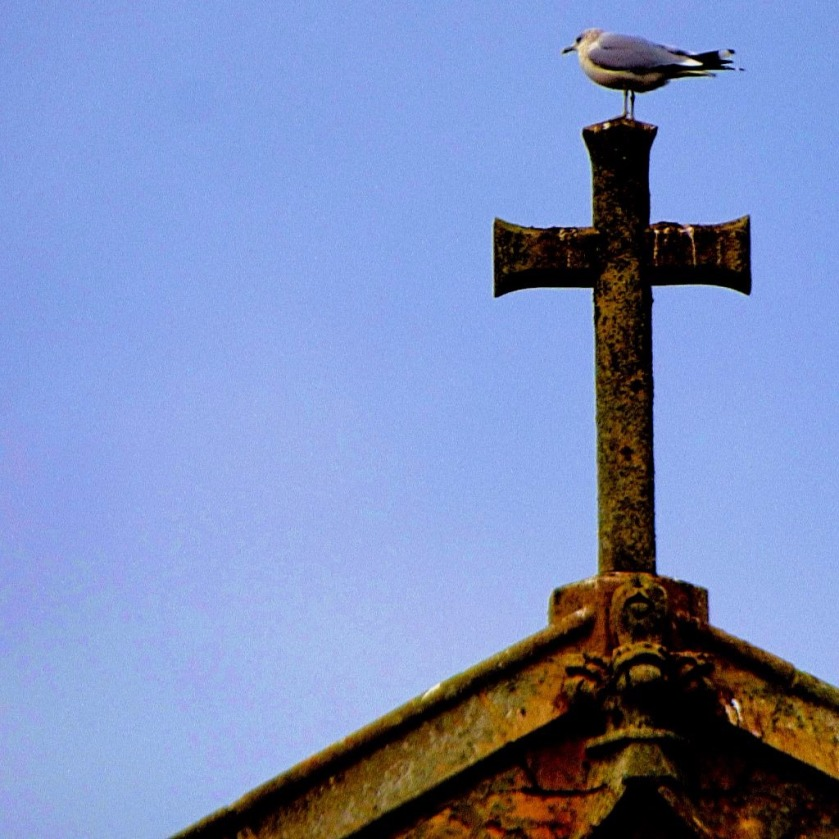 Gull on cross