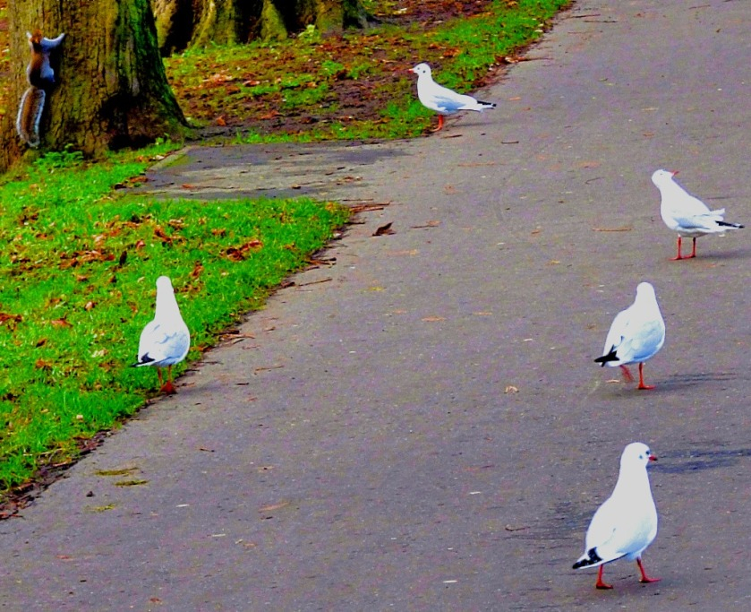 Gulls and squirrel