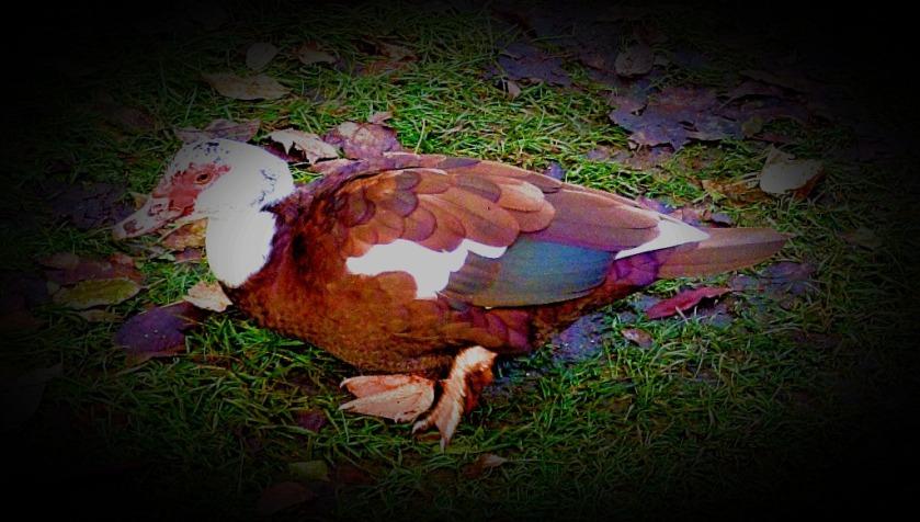 Mainly Brown Bird