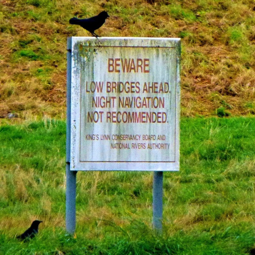 Rooks and warning sign