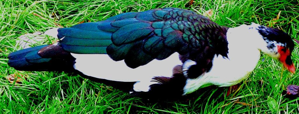 Splendid bird