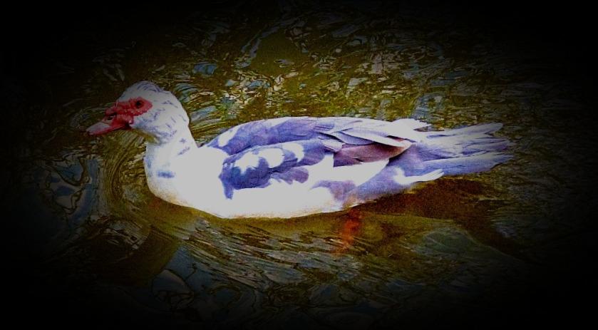 Swimming Bird I
