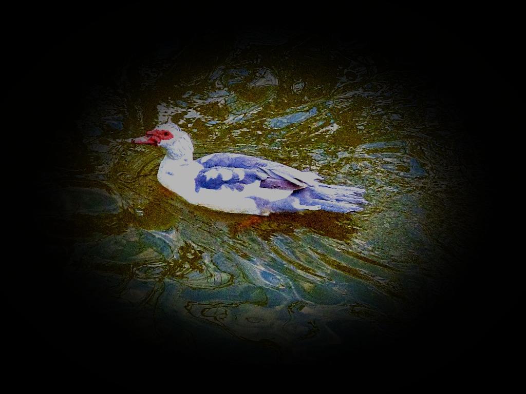Swimming Bird II