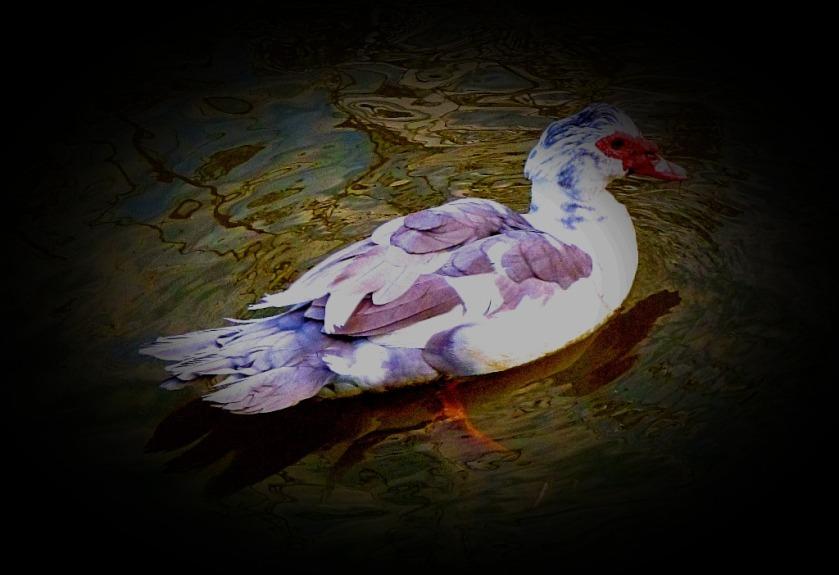 Swimming Bird III